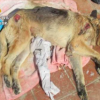 Axarquia's Animal Shame