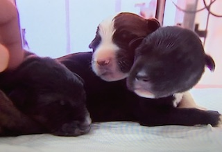 Puppies Rescued from Well