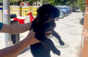 ALM Rescued Pup Carribe