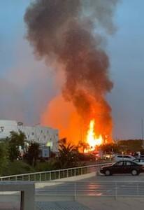 MOT Palm Tree Plantation Blaze