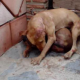 Illegal Dog Fights