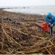 Beach Plastic Clean Up