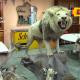 Exotic Animal Taxidermist Bust
