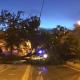 Fallen Tree Disrupts Salobreña