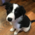 Selling A Moribund Pup