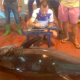 Monster Motril Tuna Caught