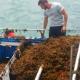 Seaweed's Origin Confirmed