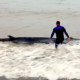 Bather Rescues Whale