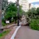 Tree Blown Down in Motril