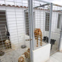 Animal Cruelty at Dog Shelter?