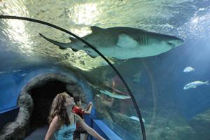 ALM Aquarium OnL