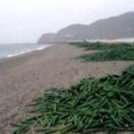 ECO Cucumber Beach