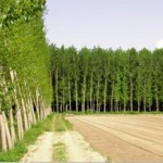 AND Poplar Plantation OnL