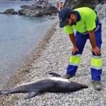 lhr-dead-dolphin-onl