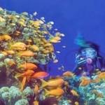 lhr-underwater-photography-onl