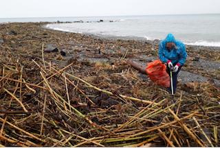 ALM Plastic Beach Clean Up 2