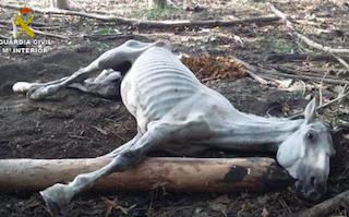 GRA Horse Starved to Death
