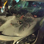 ALM Car hit by falling tree in Jete