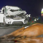 SPN Horse causes road accident