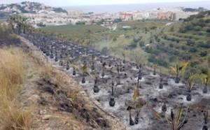 ALM Burnt Palm Plantation