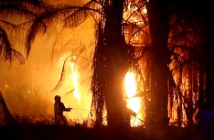 MOT Palm Tree Arson
