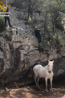 SPN Horse Rescue 01