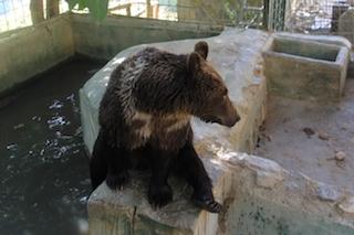 ALM Peña Escrita Brown Bears