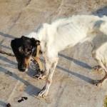 MOT Mistreated Dog