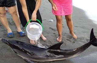 MOT Dead Dolphin