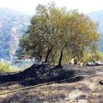 ALM Fire in Gelibra