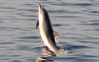 COS Dolphin Sighting