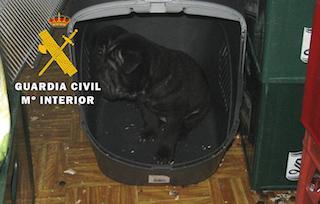 SPN Pet Shop Animal Cruelty