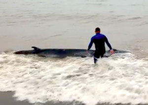 AND Whale Rescued