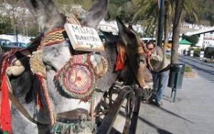 AXA Mijas burro taxies