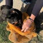 SAL Rescued Dog