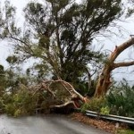 ALM Torrecueva Tree Blocks Road