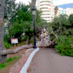 MOT Tree Blown Down in front of Church