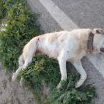 GRA PON Shot Dogs