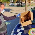 MOT Pups Found in Park