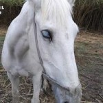 SAL Abandoned Mare