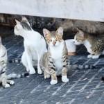 SAL Wild Cats