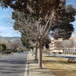 SAL avenida-andalucia