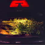 ALM Weed in Car Boot Onl