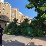 MOT Fallen Tree JL20