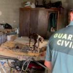 ECO Abandoned Dogs AG20