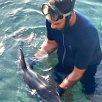 SAL Dolphin with Snorkler