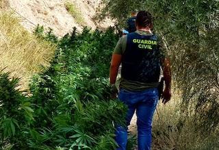 ALP Brit Cortijo Marihuana