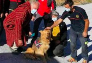 GRA Dog Recued by Sereim