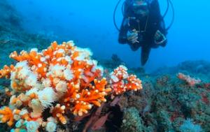 LHR Marina Coral Nursery