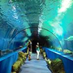 ALM Aquarium Acuario